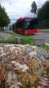 Buss31
